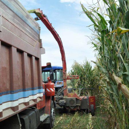 Sıra bağımsız 2 iki sıralı çift sıralı mısır silaj makinesi